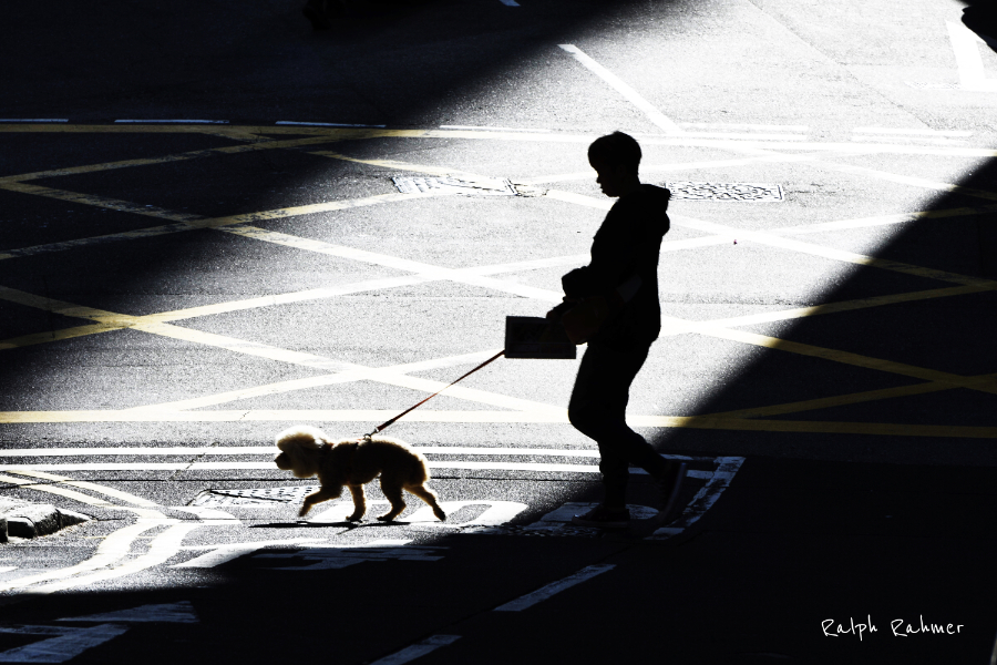 A high contrast photo of a street intersection and a woman with her dog crossing, Shadowplay effect and surreal athmosphere